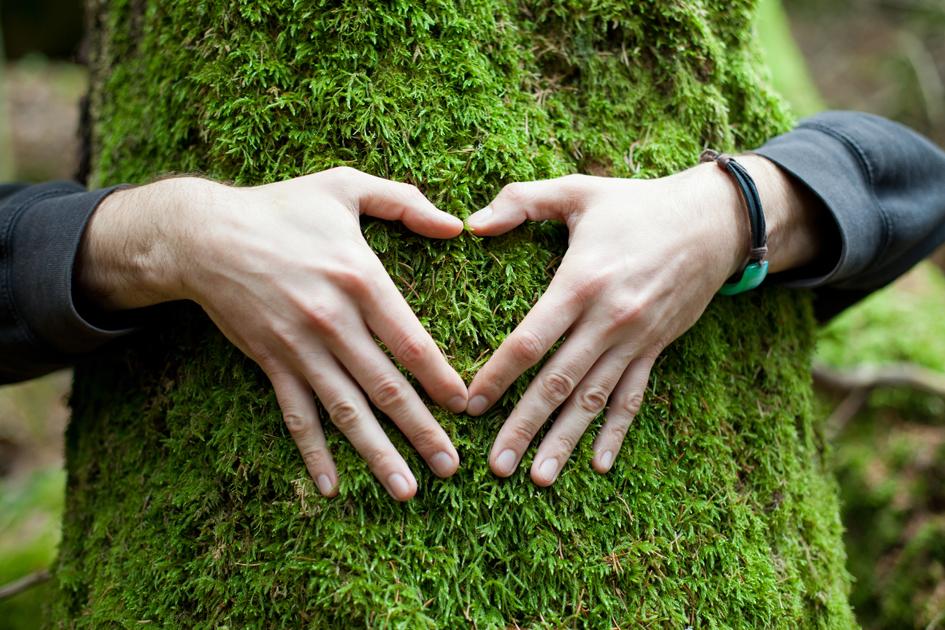 "<a href=""http://www.freepik.com/free-photo/hands-in-shape-of-heart-on-a-tree_800484.htm"">Designed by Freepik</a>"